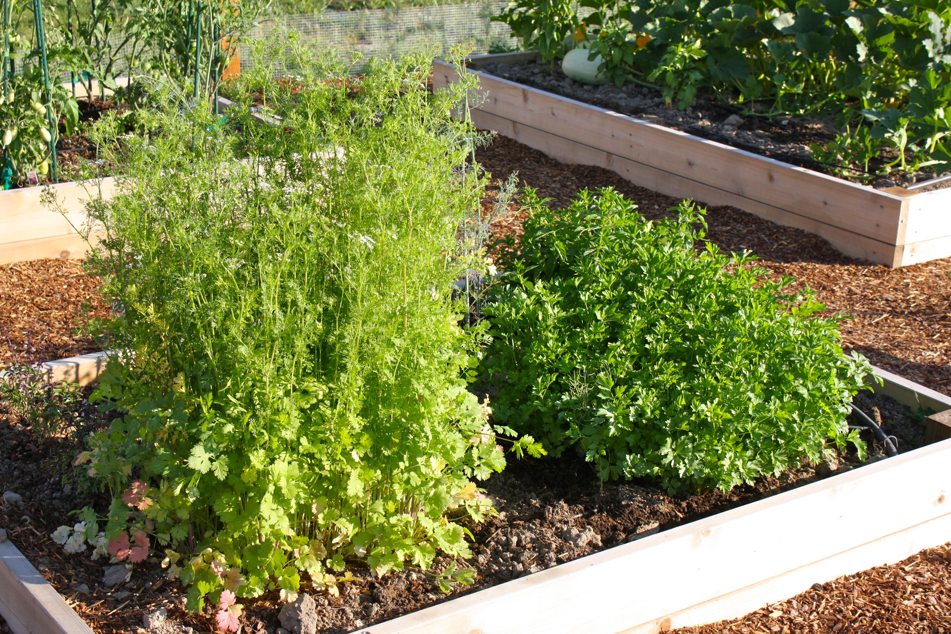 the garden the farm
