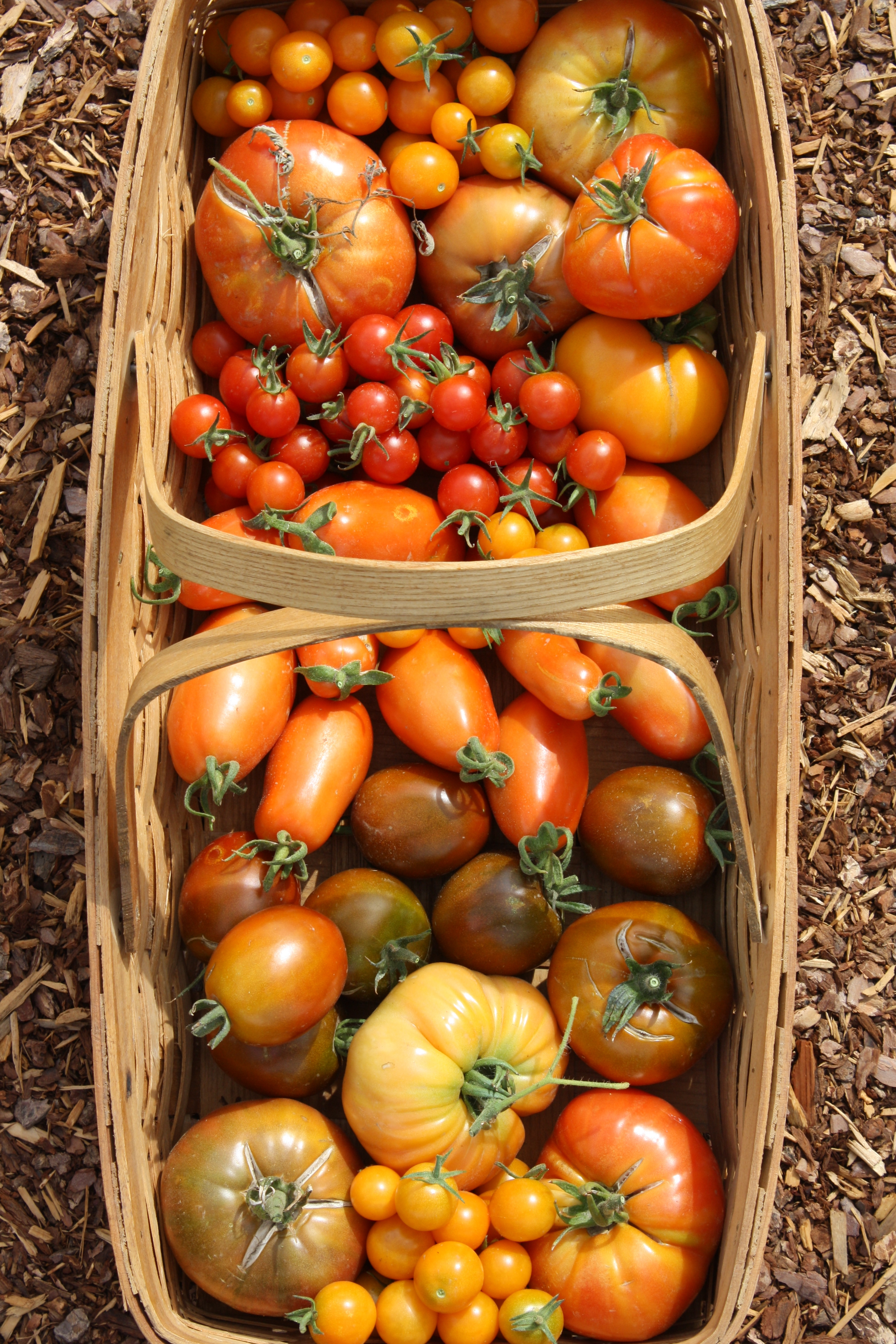 tomatoes and harvest prep the farm